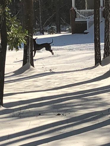 jonza in the snow